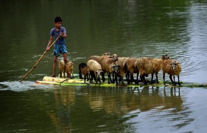 Boy & sheep in flood in India (EPA:STR) August 24 2015
