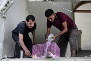 Gaza saving parakeets July 26 2014