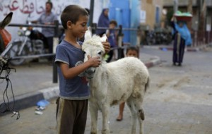 Gazan boy and donkey July 17 2014