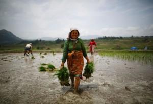 Woman farmer June 28 2014