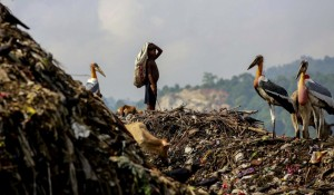 India; neoliberal waste management August 27 2014