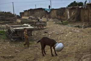 Afghani boy (Muhammed Muheisen:AP) Sept 24 2014
