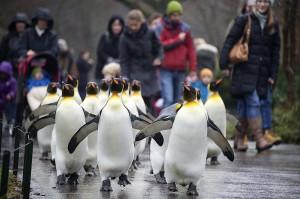 Penguins Basel Switzerland zoo (Georgios Kefalas:Keystone) Dec 18 2014