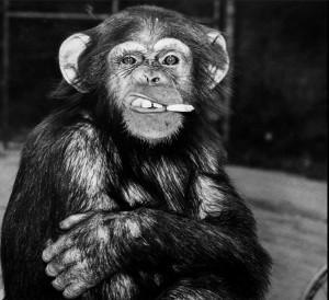 Frankie at the Griffith Park Zoo, LA (Art Rogers:LA TIMES) Feb 27 2015