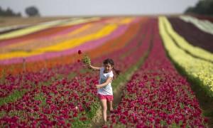 Israeli girl and flowers (Menahem Kahana:AFP:Getty Images) Apr 22 2015