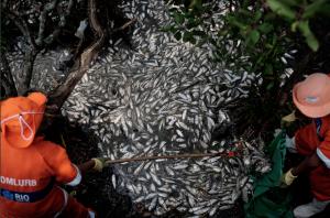 Rio de Janeiro lagoon ( Yasuyoshi Chiba:AFP:Getty) Apr 18 2015