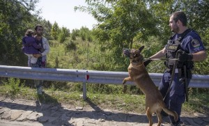 Refugee confronted by police dog (Dan Kitwood:Getty Images Europe) Sept 20 2015
