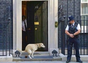 A dump at 10 Downing St.