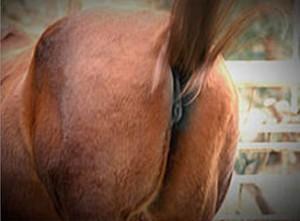 Donald Trump as horse's ass