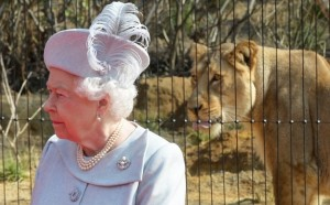 Betty Windsor & the lion at the zoo