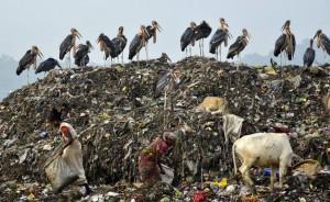 Guwahati city, Assam, India dump site (EPA) June 5 2016