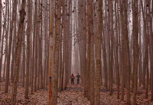 Men exercise amongst the trees on a cold winter morning in the outskirts of Srinagar. REUTERS:Danish Ismail) Dec 6 2016