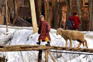 Srinagar Kashmir from 2012