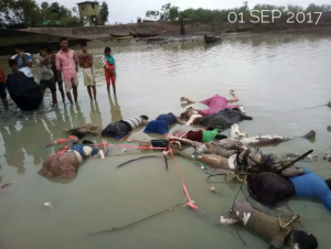 Rohingya bodies in river Sept 14 2017