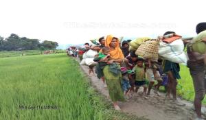 Rohingya fleeing Aug 31 2017