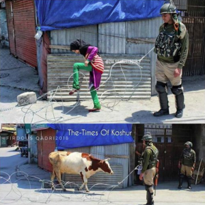 Kashmiri girl, cow & soldier with razor wire (The Times of Koshur) May 22 2018