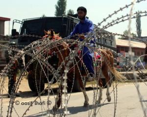 Kashmiri horse rider (Aasif Shafi) Sept 7 2018